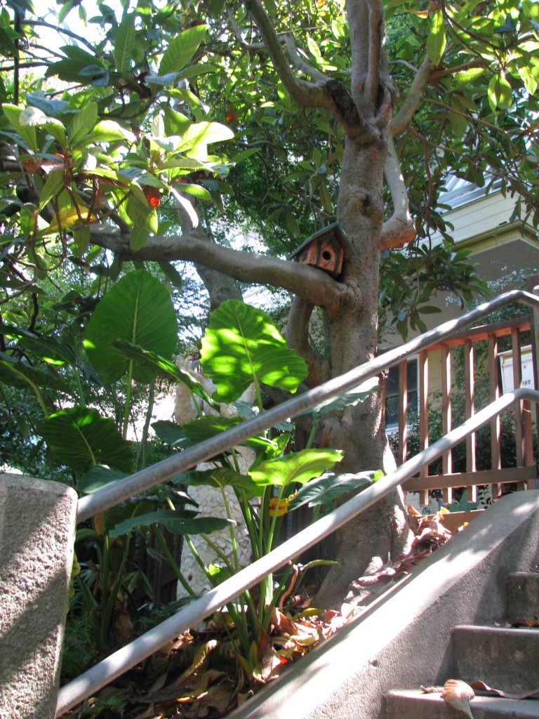 2013 09 10 SF Filbert Stairs (13)