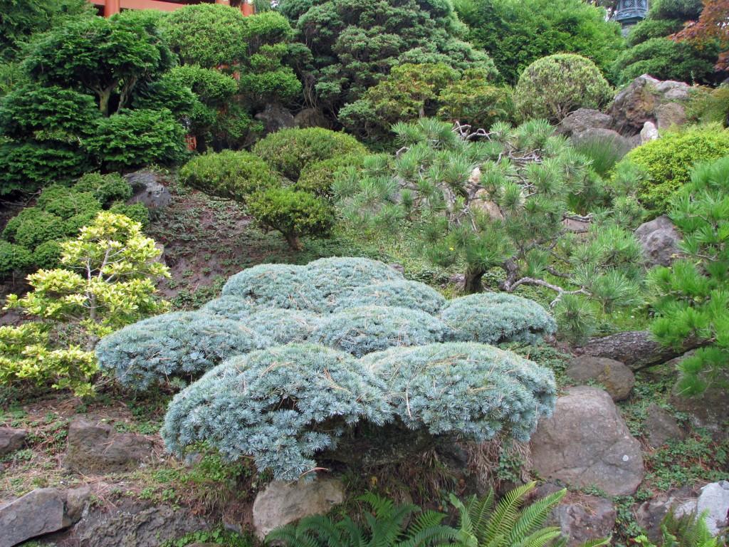 2013 09 12 SF Garden Gate Park Japanese Tea Garden (18)