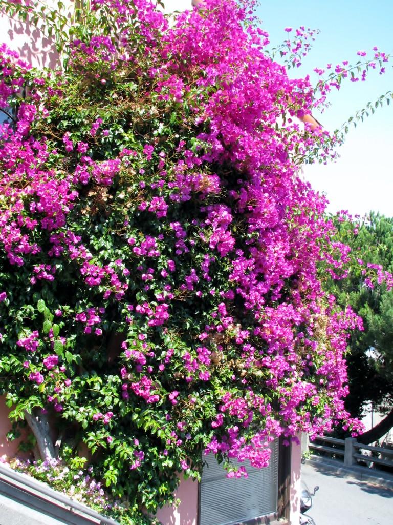 2013 09 10 SF Filbert Stairs Flowers (3)