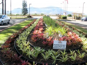 2013 10 29 Hawaii Dole Plantation Entrance Plants
