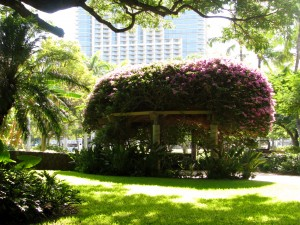 2013 10 28 Hawaii Hale Koa Hotel Plants (7)