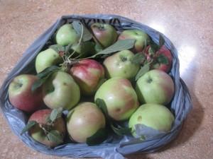 2014 08 23 Dehydrating Apples (1)