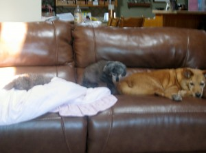 2014 09 02 Dogs on Couch