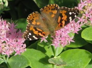 2014 10 06 Butterfly fountain (8)