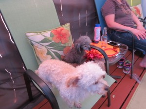2014 07 04 4th Pool Party Dogs (2)