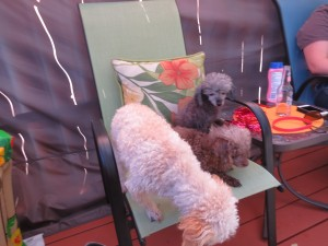 2014 07 04 4th Pool Party Dogs