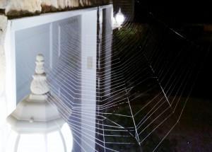 2014 10 23 Spider Web 4302 Broadway Terr Spider Web