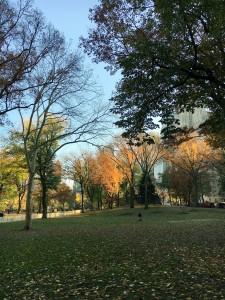 2015 11 25 New York Central Park (3)